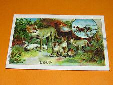 CHROMO BON-POINT ECOLE 1900-1914 LE LOUP ANIMAUX SAUVAGES LOUVETEAUX
