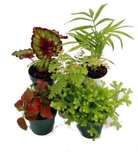 Terrarium Fairy Garden Plants 5 Plants In 2 Pots Collection Live