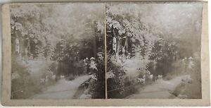 Snapshot Alla Campagna Legno Foto Stereo Vintage Citrato c1900