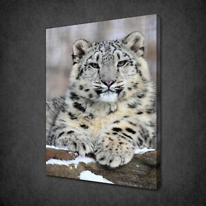 WHITE SNOW LEOPARD CANVAS PRINT PICTURE WALL ART HOME DECOR FREE DELIVERY