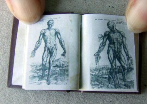 Dollshouse Libro Miniatura-Siglo Xvi Anatomía Libro