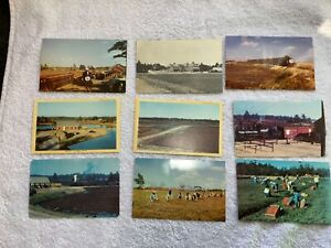 VINTAGE-POSTCARDS-EDAVILLE-RAILROAD-MASSACHUSETTS-CRANBERRY-BOG-EPHEMERA
