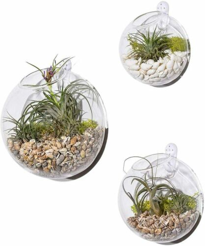 3Pcs Wall Hanging Terrariums Indoor Plants Holders Wall Glass Vase Wall Planters