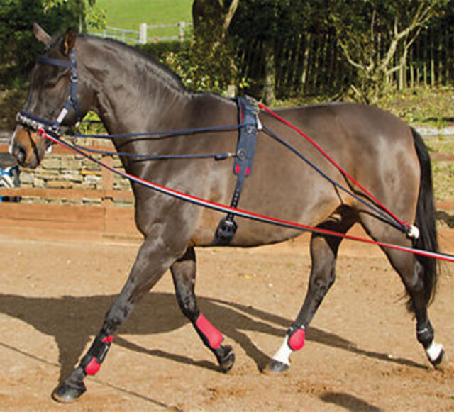 John Whitaker Training System Aid Pessoa With Roller  Lunging System