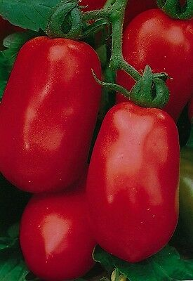 Vegetable - Tomato - Roma - 1000 Seeds - Bulk