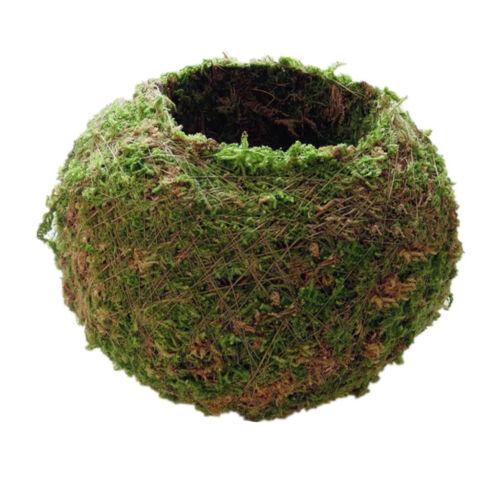 Kreative Mooskugel Form Blumentopf für Sukkulenten Grün Pflanzen 6cm