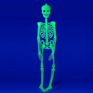 Halloween-Deko-Grusel-Kunststoff-Skelett-90cm-Helloween-leuchtet-im-Dunkeln-gruen