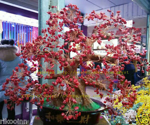 AAA Lucky Tree!! Natural Multi-color Quartz Crystal Gem Tree