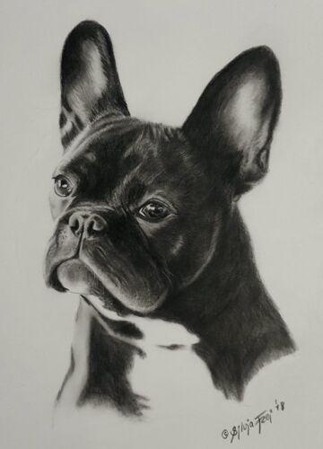 Tierportrait nach Foto A4 sw Bleistift Tierporträt nach Foto Tier Zeichnung