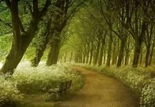 Forêt verte empiècement Papier-peint Mur Mural 3.66x2.54 m salle à manger