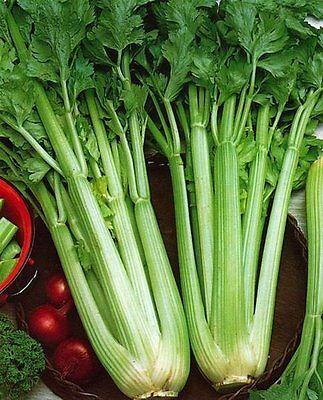 Celery Seeds, Utah Tall, Heirloom Herb Seed, Bulk  Celery, Vegetable Seed, 500ct