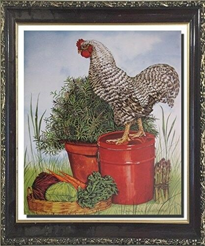 Barred Plymouth Rock Rooster Chicken Wall Mahogany Framed Art Print Picture