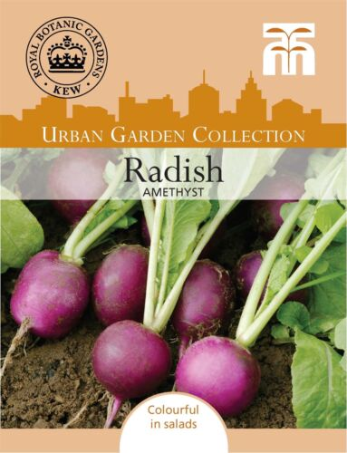 Thompson /& Morgan Radish Amethyst Kew Urban Vegetables 250 Seed