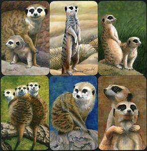 SPODOOKI-MEERKAT-THEME-SWAP-CARD-COLLECTION-OF-6-FROM-PURPLE-SERIES