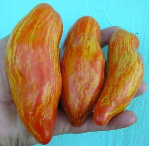 Efficace Rare Collection De Graines De Tomate Feather Firebird (rayé Prune) Heirloom Seeds-afficher Le Titre D'origine