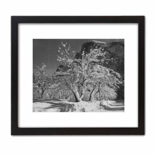 Apple Tree Orchard at YOSEMITE ~ Half Dome Historic Art Print Photo ANSEL ADAMS