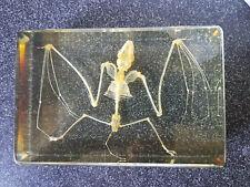 Echte Fledermaus- Skelett Präparat in Kunstharz (T-FLE-011)