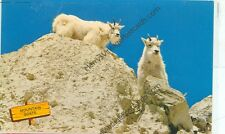 ROCKY MOUNTAIN GOATS-CANADIAN ROCKIES-CHROME-(GOAT-58)