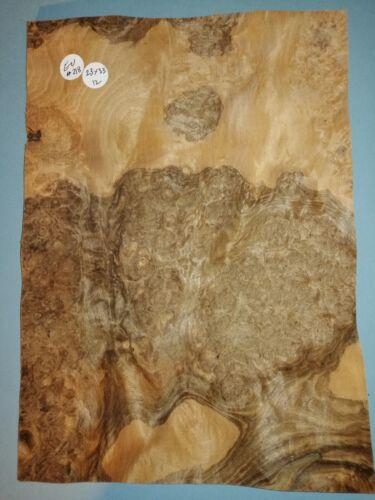 CONSECUTIVE SHEETS OF EUROPEAN BURR WALNUT VENEER 23 X 33 cm EU #218 MARQUETRY