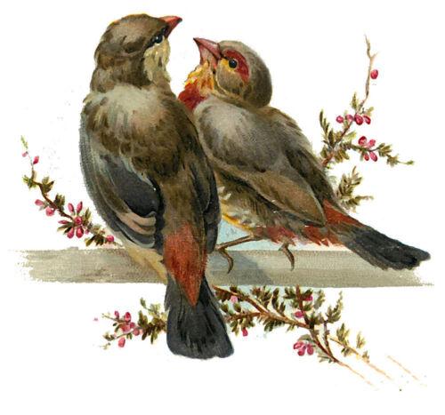"""Waterslide Decals 4pcs 2.5/""""x3.5/"""" FLONZ 412-0112 Birds Couple Love Vintage"""