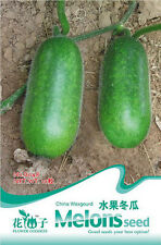 1 Pack 10 China Wax gourd Seeds Winter Melon White Gourd Organic B048