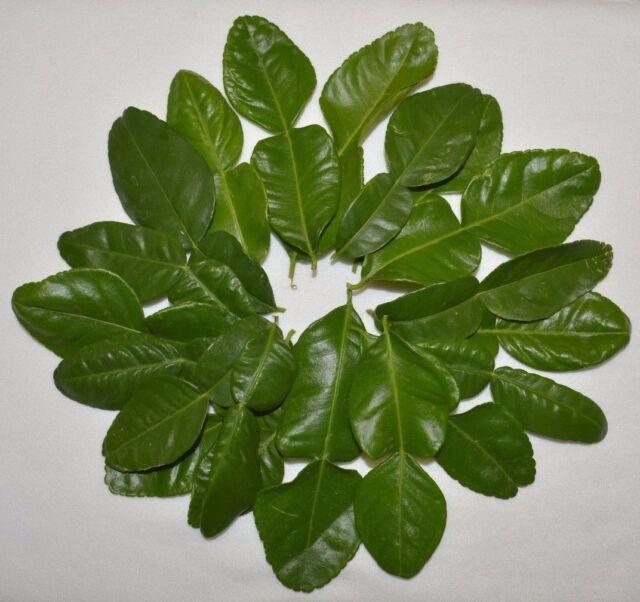 Organic Tropical Fresh Vegetable Leech Lime Papeda Kaffir Lime Seeds C1MY