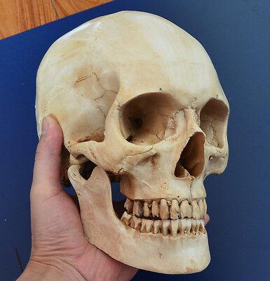 Skull Unique Light Gray Hand made Human Resin Skull Medical Replica Cranium 1:1