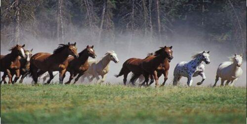Horses Running Photo License Plate
