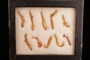 RARE-LOCALE-Native-Gold-Crystal-Collection-SONORA-MEXICO-Ex-Filer
