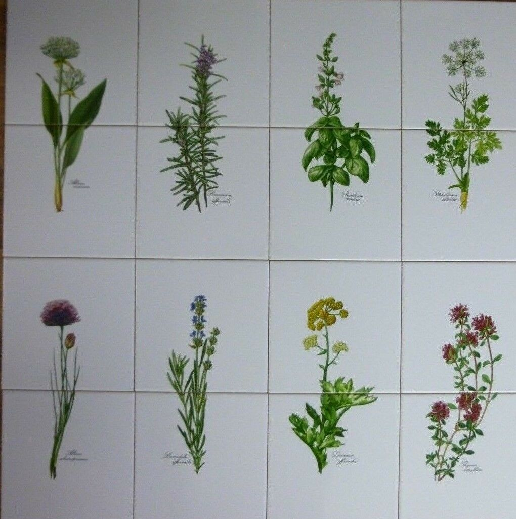 15x15 Glanz 8er Set  Küchenfliesen mit Kräutemotiven