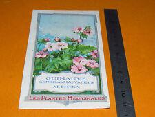 CHROMO 1900-1920 BON POINT ECOLE PLANTE MEDICINALE GUIMAUVE ALTHOEA OFFICINALIS