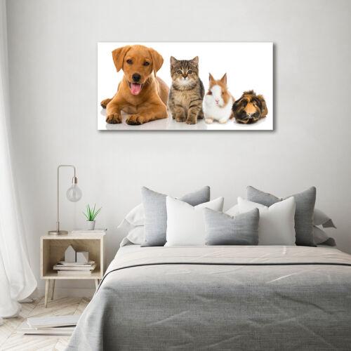 Acrylglas-Bild Wandbilder Druck 140x70 Deko Tiere Hund und Katze