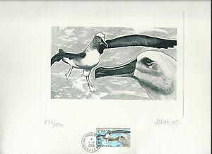 Taaf Fsat Albatross Mollymawk Bird Signed Large Engrave Artist Die Proof ** 1998