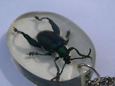 Echtes exotisches Insekt als Schlüsselanhänger - neu  einmalig und selten    03