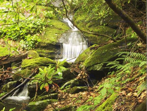 NATURE LANDSCAPE FOREST WATER FALL GREEN POSTER ART PRINT HOME PICTURE BB1437B