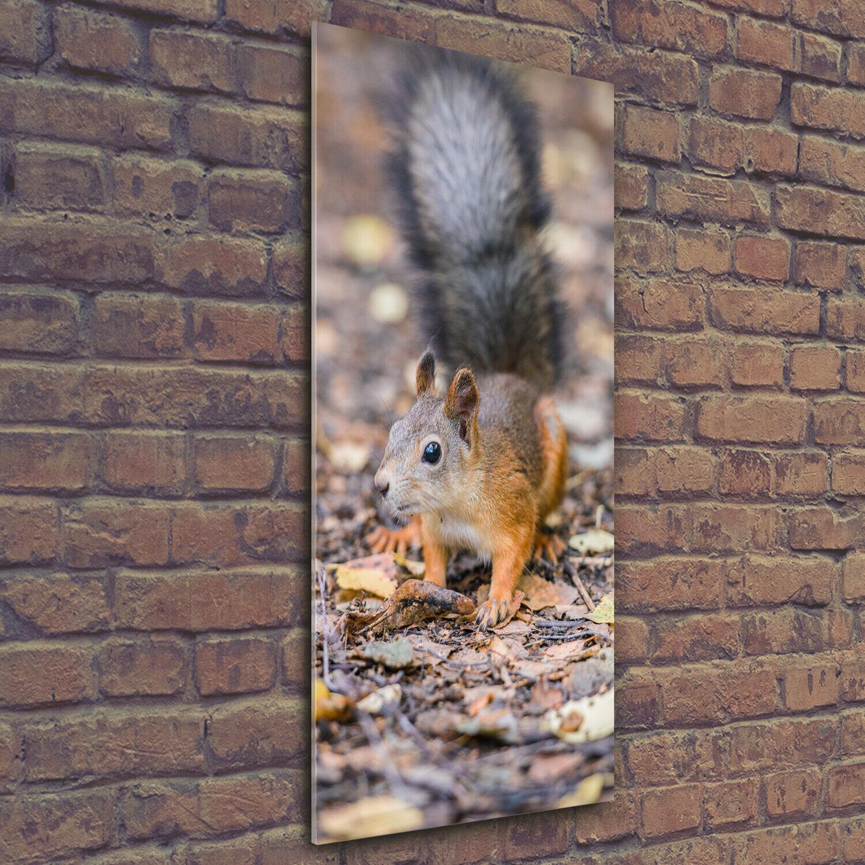 Wandbild Druck auf Plexiglas® Acryl Hochformat 50x125 Eichhörnchen Wald