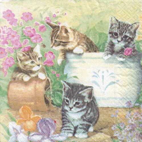 2 seltene Servietten spielende Kätzchen Katze Katzen Töpfe Blumen
