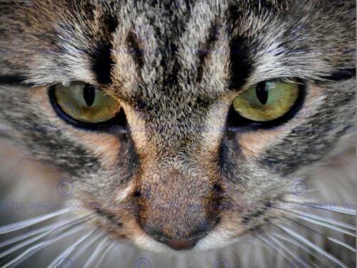 PHOTO PORTRAIT DETAIL CAT FACE EYES NOSE DOMESTIC PET COOL POSTER PRINT BMP10861