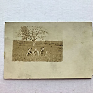 Vintage-RPPC-3-Women-Laying-in-a-Field-Divided-Back-Uncirc