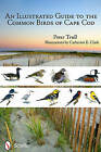 An Illustrated Guide to the Common Birds of Cape Cod by Peter Trull (Paperback, 2011)