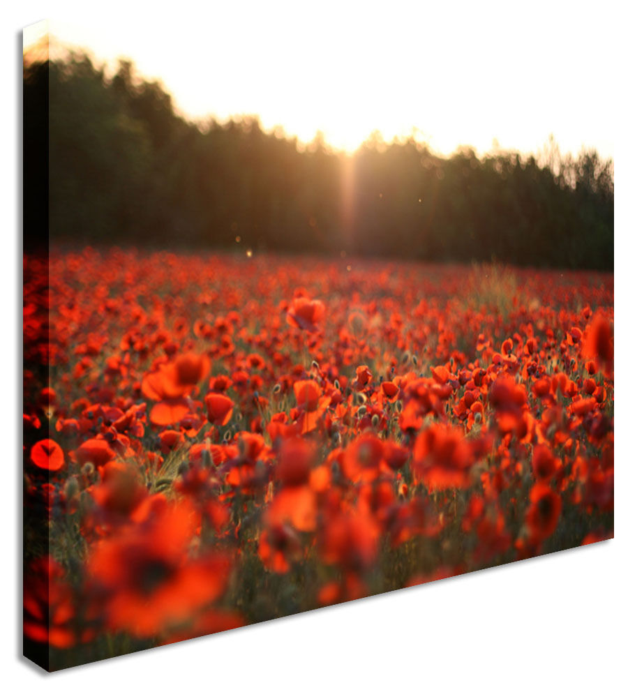 Large Poppy Field Lull Printed Canvas Wall Art Pictures