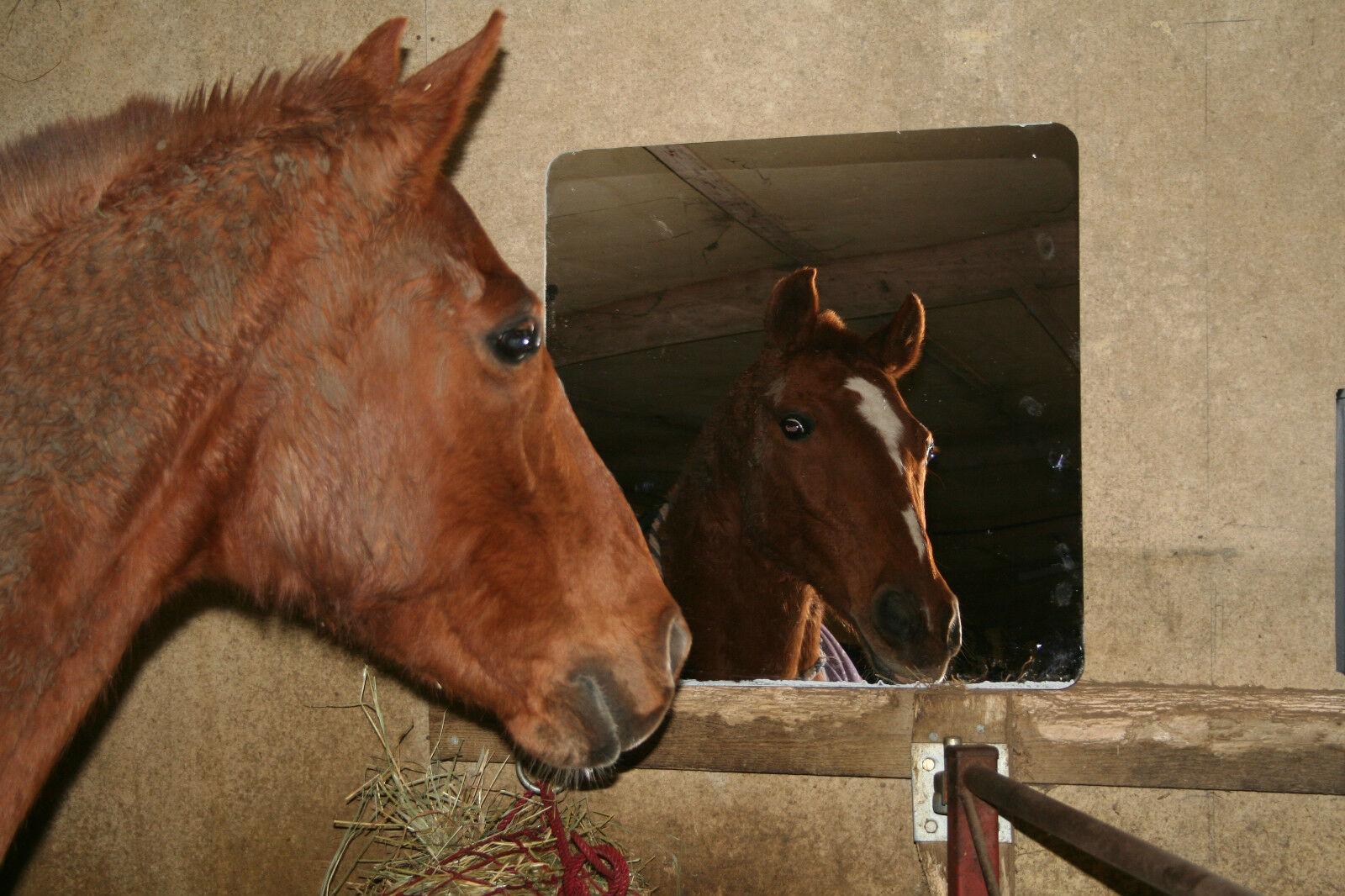 Stable Mirror 1200mm x 800mm - Acrylic - Safety - Non Shatter - Fast Delivery