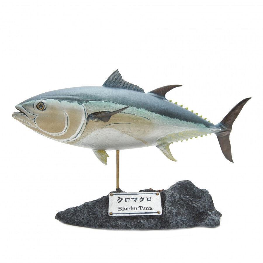 Kaiyoukoubou Pacific blufin Tuna Vero Figura Pesce Lavori di Intaglio Nuovo Da