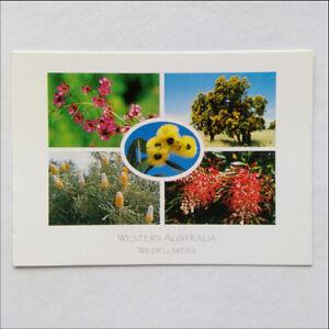 Western-Australia-Wildflowers-5-Views-Postcard-P392