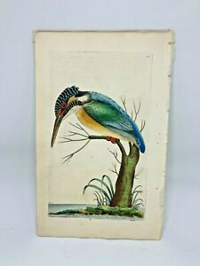 Common-Kingfisher-1783-RARE-SHAW-amp-NODDER-Hand-Colored-Copper-Engraving