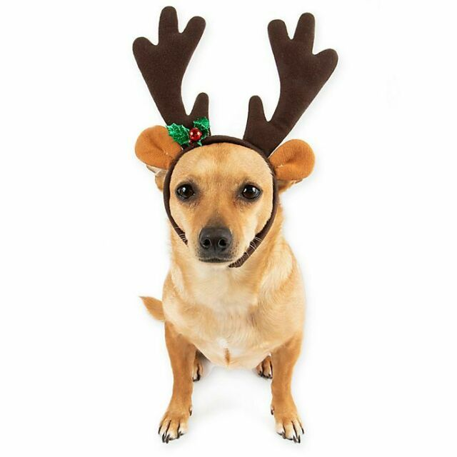 "Pawslife Christmas Reindeer Pet Dog Headband Head Circumference 11-13"" Paws Life"
