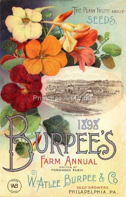Burpee Vintage Seed Catalogue Covers Flowers SET OF 3 Full Color Prints!