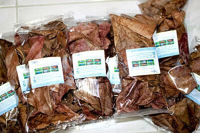 Glorious 1,000 Grams Grade Premium Indian Almond Leaf Thailand Leaves Clearance Price catappa/ketapang