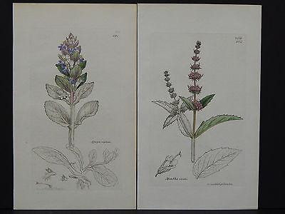Botanicals, J. Sowerby, Copper c.1800 Plate engraving, Original Hand color g#023