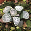 Haworthia-groenewaldii-Succulent-plants-potted-Plants-Home-Garden-Bonsai-Garden thumbnail 3